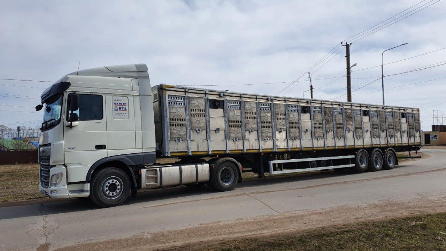 Перевозка животных и скота 8-965-920-08-80 - Горно-Алтайск, цены, предложения специалистов